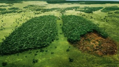Rainforests Lungs of Earth